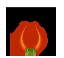 S*Capsicum's NFO Logo